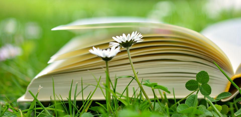 book-2304389_960_720